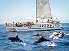 Paseo Super Catamaran Costa y Delfines