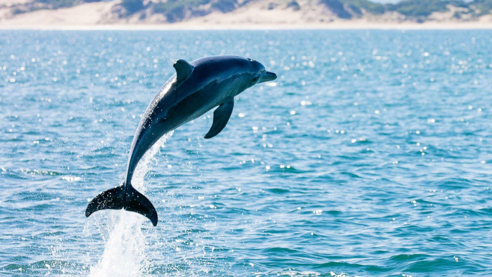 observacion delfines